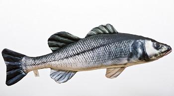 Sea Bass (Mořský vlk) - 70 cm polštářek