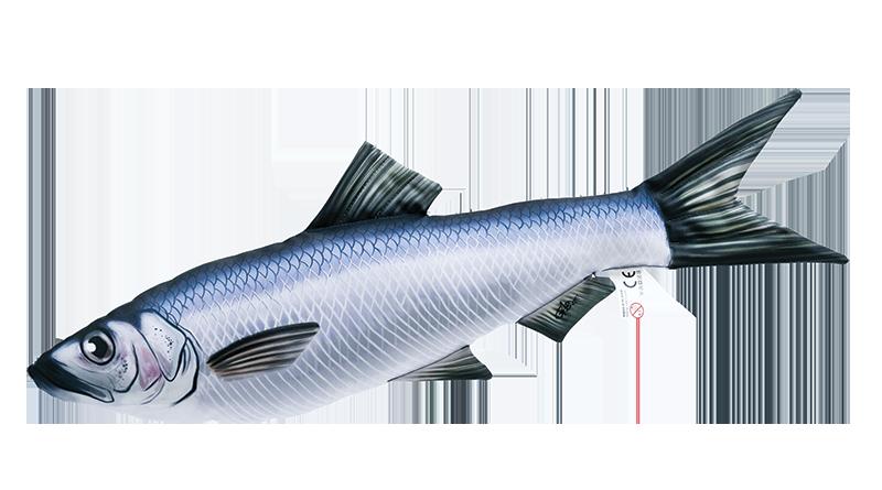 Sleď obecný (clupea harengus) - 60 cm polštář