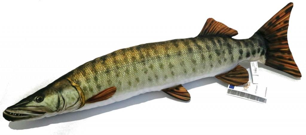 Štika muskalunga (americká)  - 80 cm polštářek